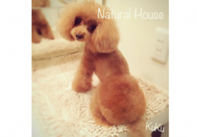 Dog Salon Natural House