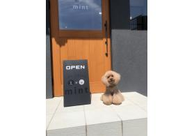 dog salon mint